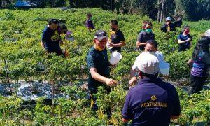 Suasana Saat Walikota Tomohon Bersama Jemaat Maranatha Paslaten Penen Cabe